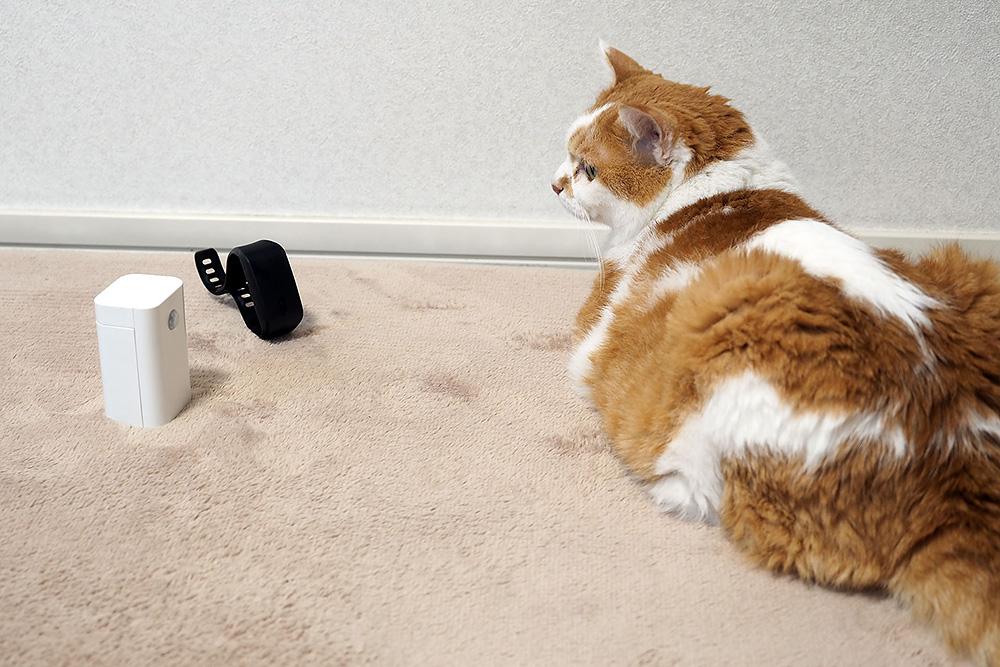 「SSS-01」を室内猫に見せてみると、センサーの反応でブルブル震えるリストバンドがおもしろいらしくそこそこ遊んでくれた。室内のペットの居場所を知るのにも活用できるかもしれない