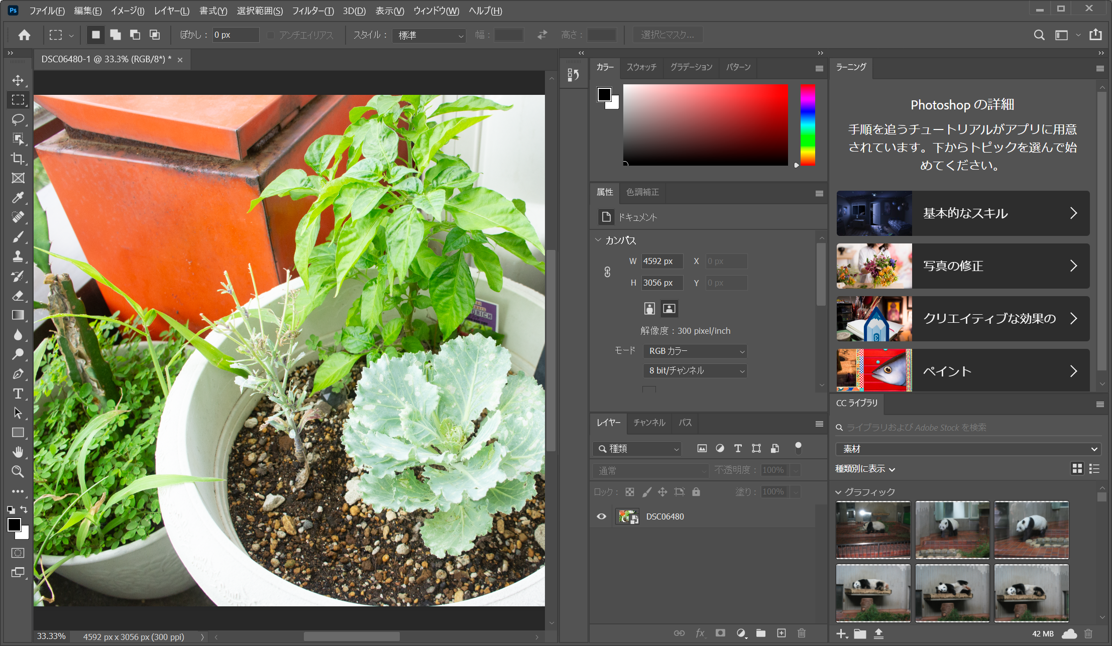 Adobe Photoshop 2020(フィルター処理)