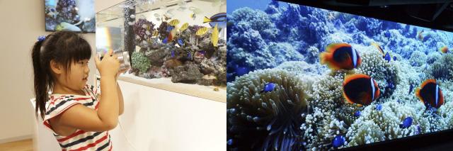 GINZA PLACEで水槽の魚を撮影体験(左)。沖縄美ら海の4K映像上映(右)も