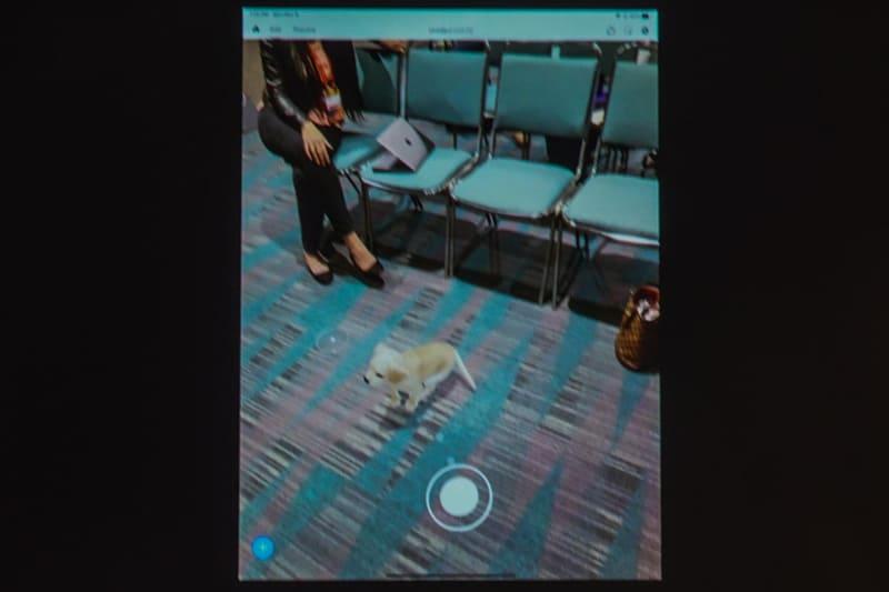 来年以降のAdobe Aeroに搭載される「犬」。丸いポイントを追いかけて自然に動く。モーションはすべてSenseiが映像から作り上げている