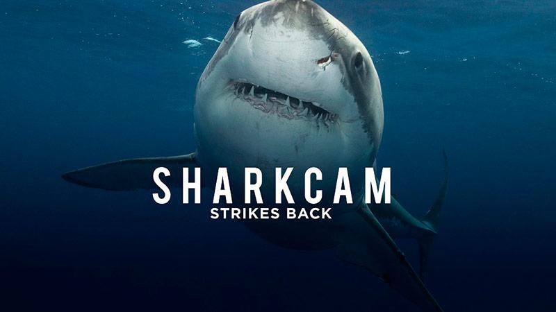 """「サメに密着!シャーク・カメラ」<br><span class=""""fnt-70"""">(c)Discovery Communications, LLC</span>"""