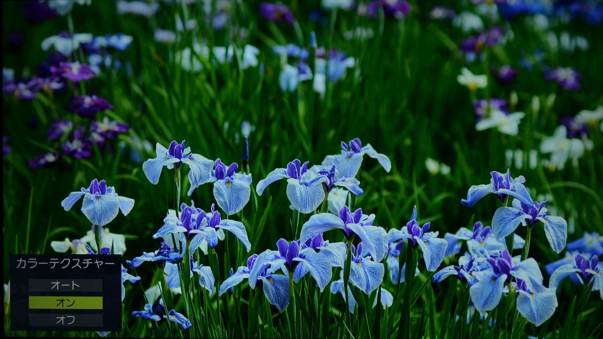 カラーテクスチャー=オン。紫の花びら、および白の花びらの脈部分の先鋭感の違いに着目