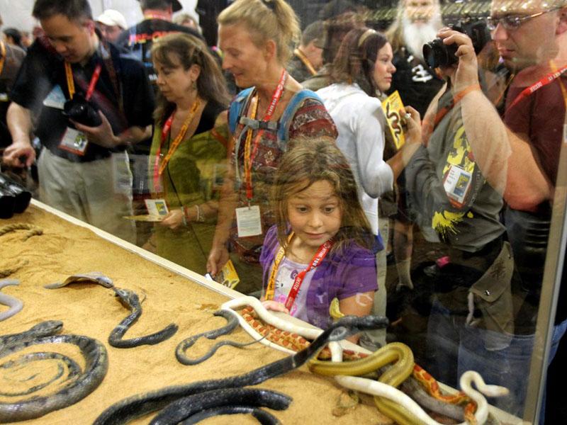 本物のヘビに女の子もビックリ。なお、爬虫類のヘビは気温が下がると動かなくなってしまうため、展示ケースの下に敷かれた砂の下にはヒーターが忍ばせてあるという。エサは毎日やる必要はないので、事前に存分に与えてコミコン会場入りしたとのこと