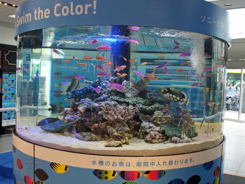 ビル内には熱帯魚約400匹が入る大水槽