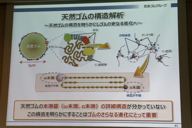 結合した天然ゴム分子の両端の「末端基」の構造も不明だった