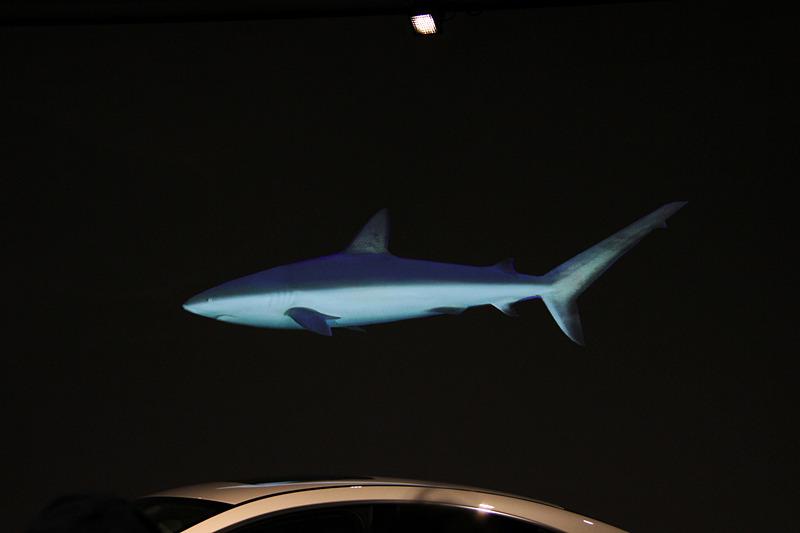 新型CLSのデザインはオグロメジロザメからヒントを得た