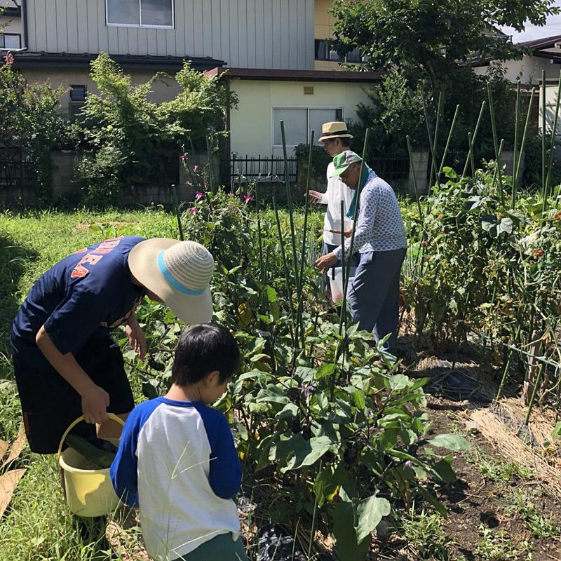 父がコツコツと育てた畑で、野菜の収穫を楽しむ甥っ子たち。都心ではなかなかできない体験に、みんな楽しそうです