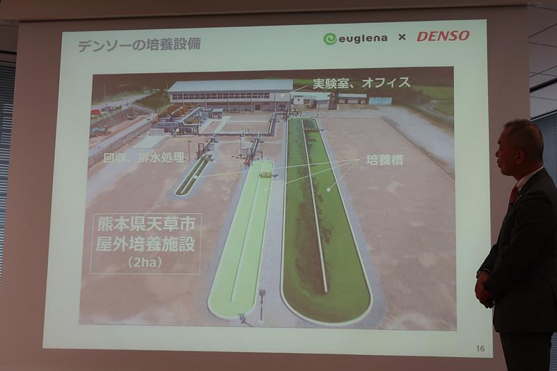 熊本県天草市の廃校跡地を利用し、大規模な屋外培養を実施中