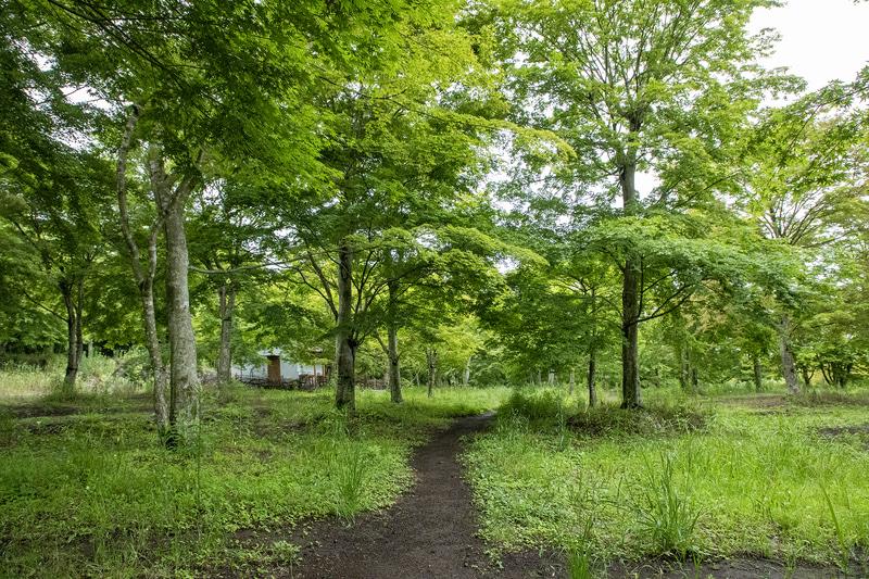 サイト内の風景。サイトは17個あり、サイト内へのクルマの乗り入れは不可なのでテント泊用のキャンプ場と思っていい。サイト内の主な樹木は紅葉なので秋に行くと最高の光景だろう