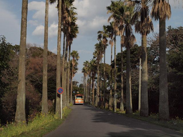 今回の寄り道は「おお田」さんから車で約25分ほどの城ヶ崎