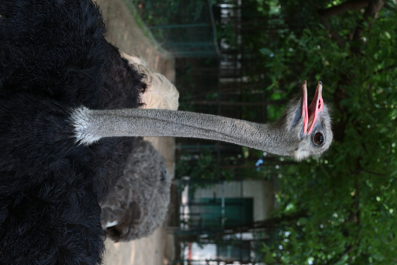 上海動物園は動物の撮影がしやすい印象