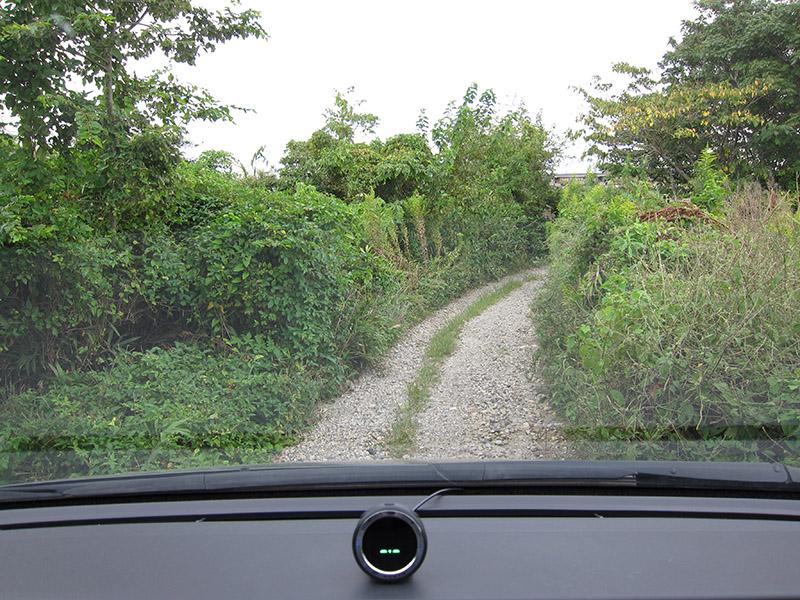 左右の枝が何度もボディーをこする道を通る