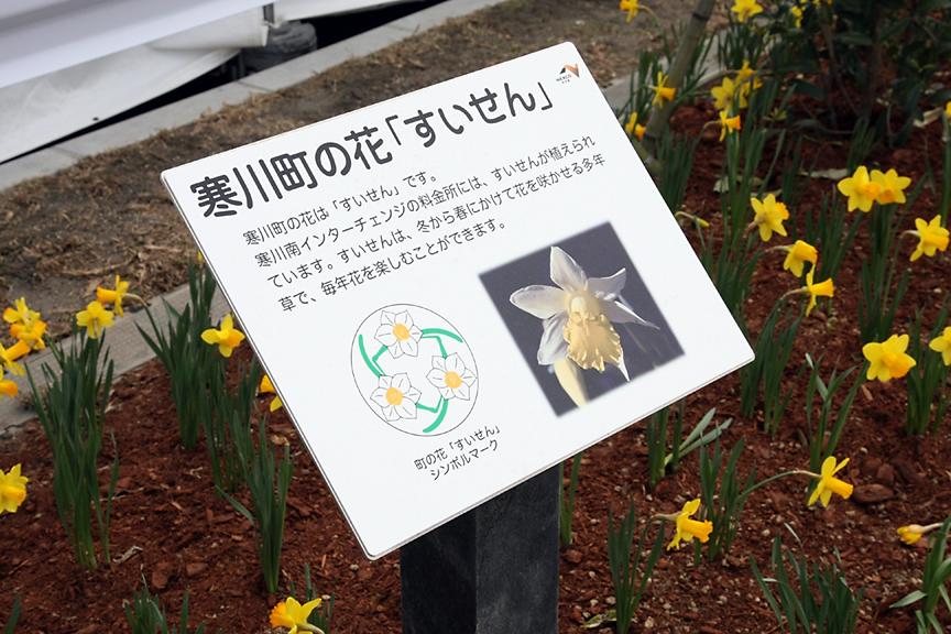 料金所脇には寒川町の花「すいせん」、同町木「もくせい」、茅ヶ崎市の花「つつじ」などが植えられている