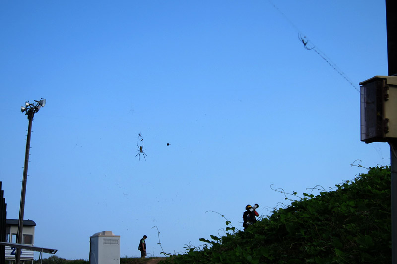 報道エリアではクモの巣は珍しくない