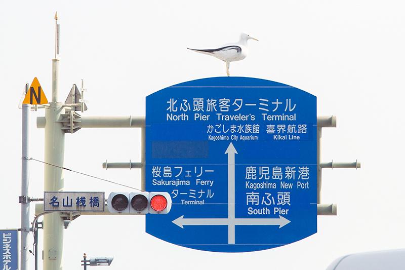 桜島フェリーで食事をするため、桜島行きの一路フェリーターミナルへ