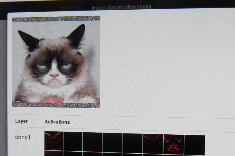 これが猫の画像