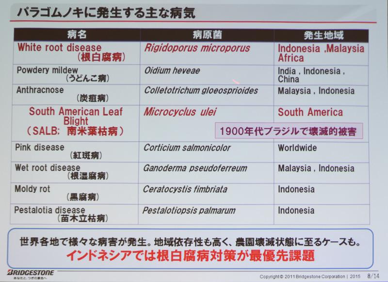 パラゴムノキに発生する主な病気