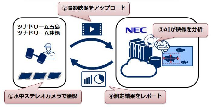 NEC養殖魚サイズ測定自動化サービスのサービスイメージ