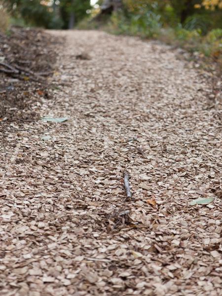 遊歩道に敷き詰められた間伐材のチップ。大変歩きやすい。