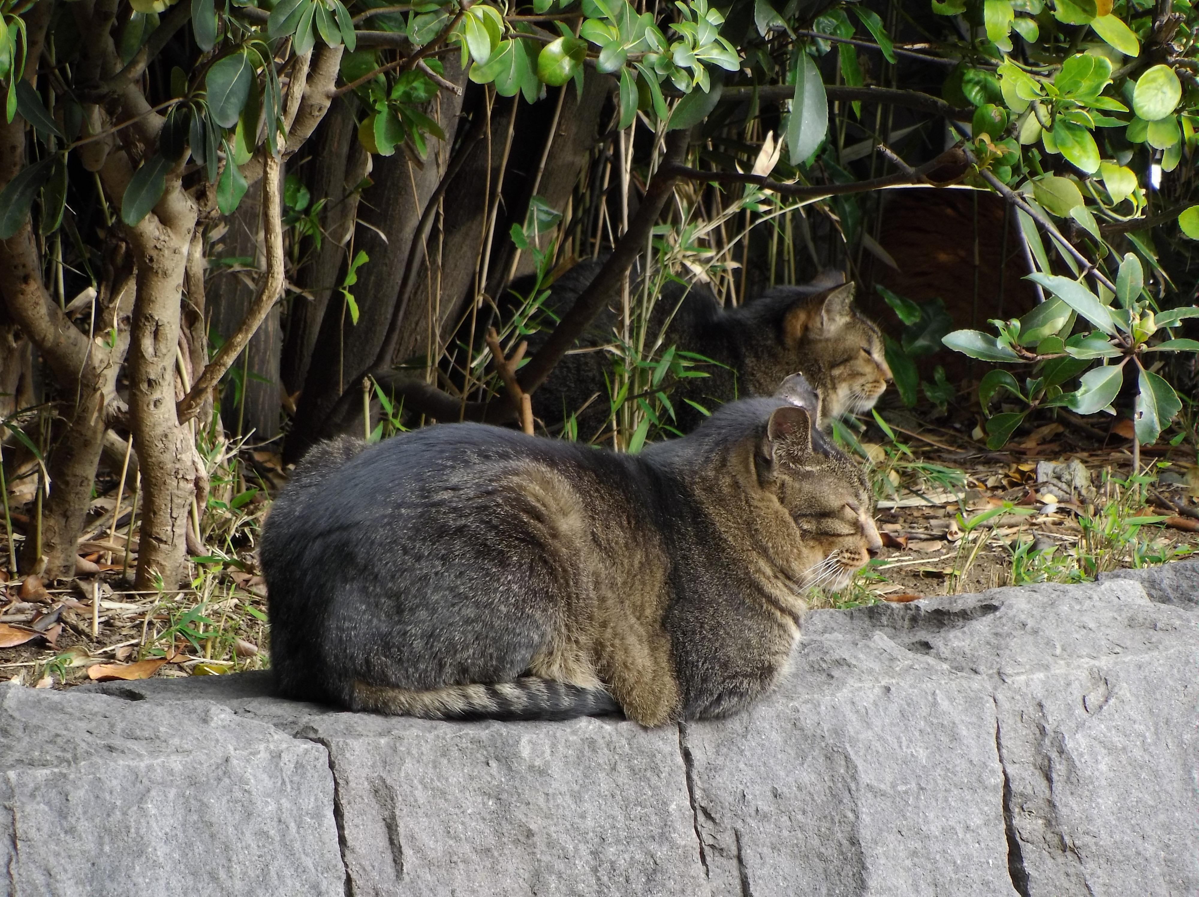 遠くから猫を撮るといった用途には最適。F6.5 / 1/50秒 / ±0EV / ISO125 / 45mm(250mm相当)