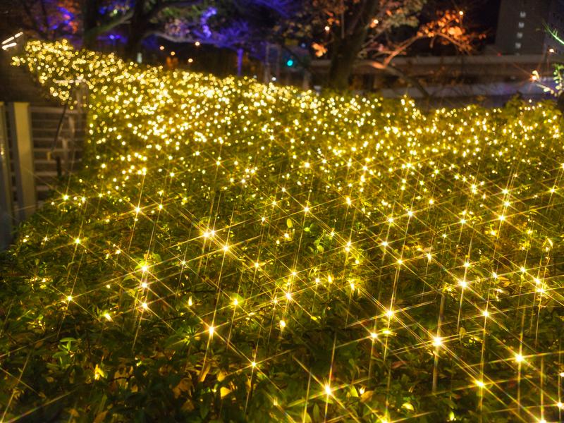 花の広場横階段