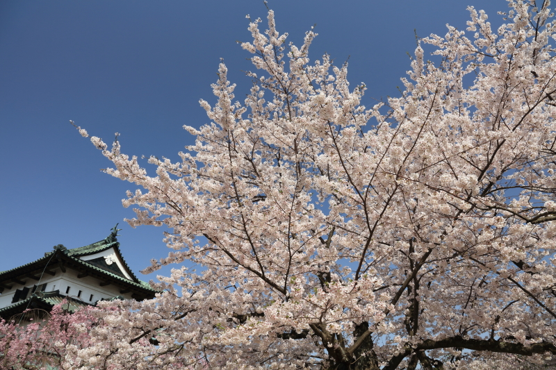 PLフィルター装着:EOS 5Ds R / EF 24-105mm F3.5-5.6 IS STM / 1/200秒 / F9 / +0.7EV / ISO200 / 絞り優先AE / 24mm
