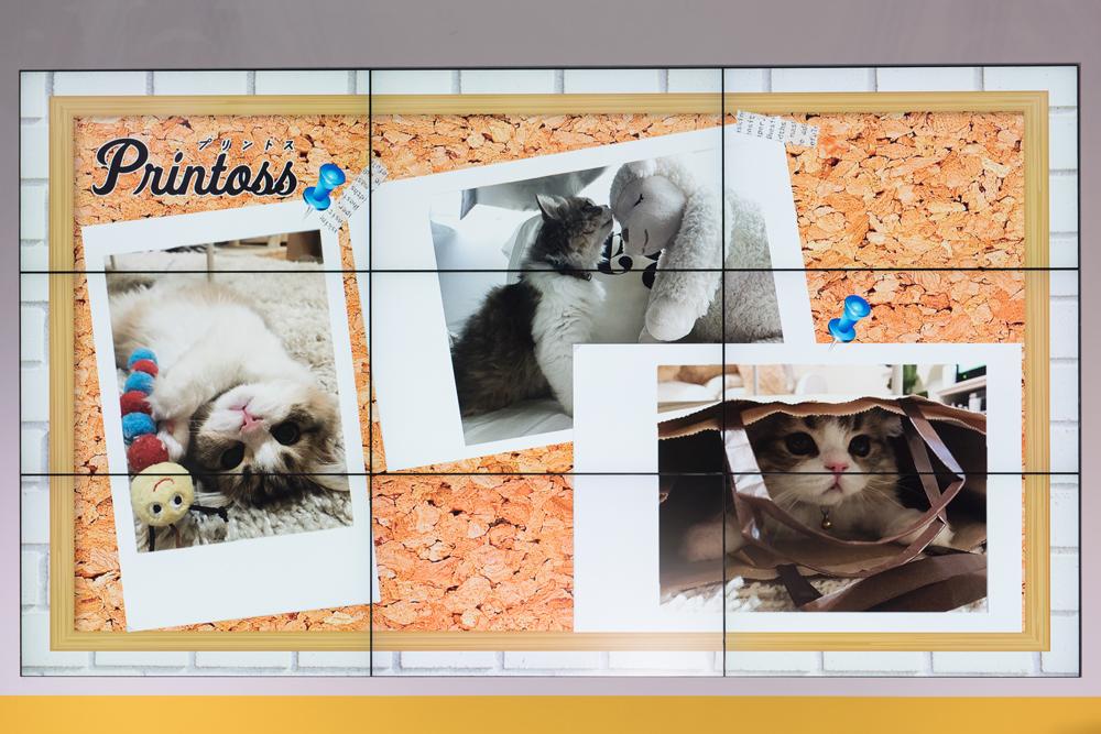 愛猫「ぽんず」の写真をはじめ、手作りの料理や旅先のシーンなどなど。