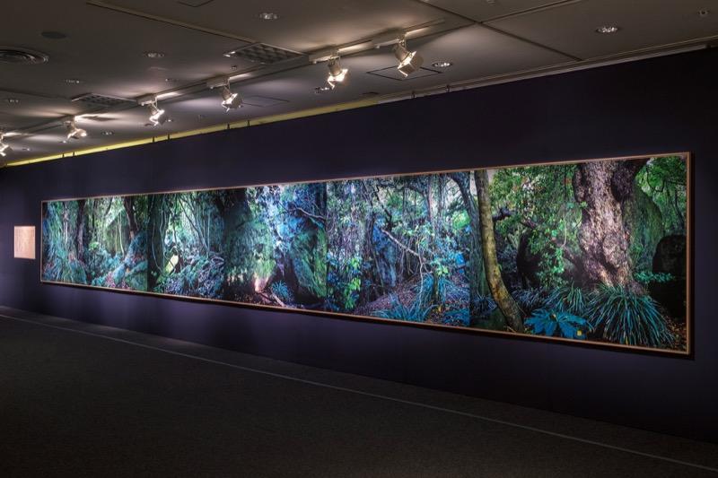 「禁足の森」の6連。全長12m。
