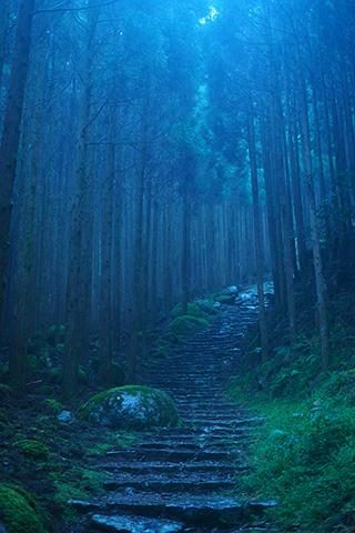 山本まりこ作品展:熊野古道を歩いています。