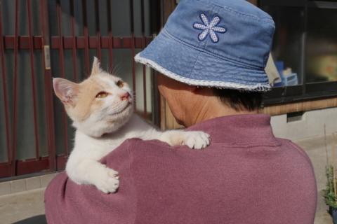 なかなか行けない猫の楽園で、猫と人の愛おしい関係に出会う(青島・後半)