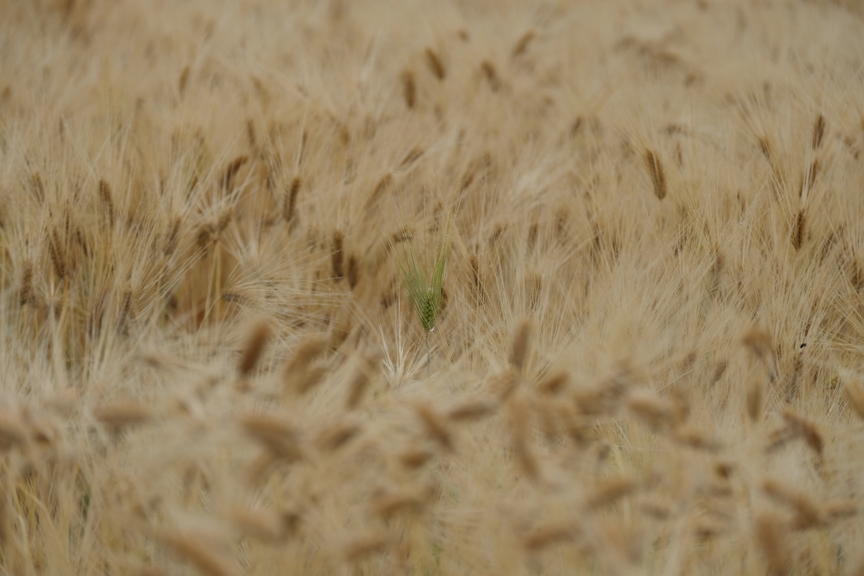 撮影:辰野清<br>X-H1 / 99.8mm(150mm相当) / 絞り優先AE(1/1250秒・F4.0・+0.3EV) / ISO 400