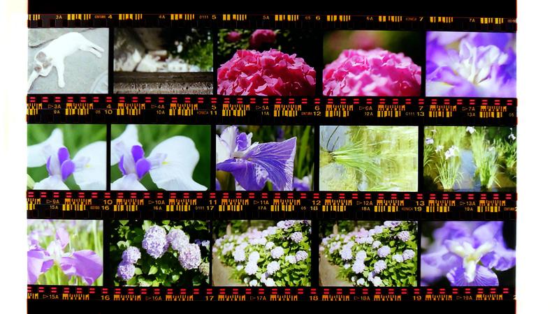 35mmカラーネガフィルムの撮影例。