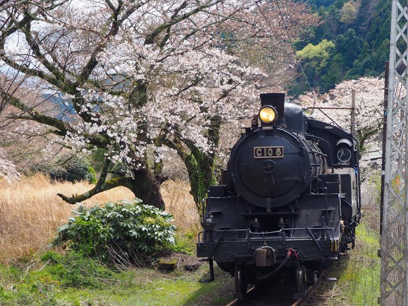 SL列車(写真は大井川鐵道提供。以下同)
