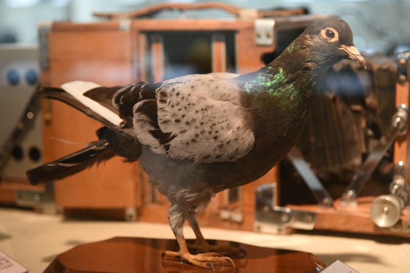 1840年にはじめて通信業務に伝書鳩が使用され、ロンドン→パリ間が6時間で情報伝達できるようになった。日本では1893年に東京朝日新聞社で研究が始められた。伝書鳩による運搬業務は、読売新聞社が1966年まで行っていた