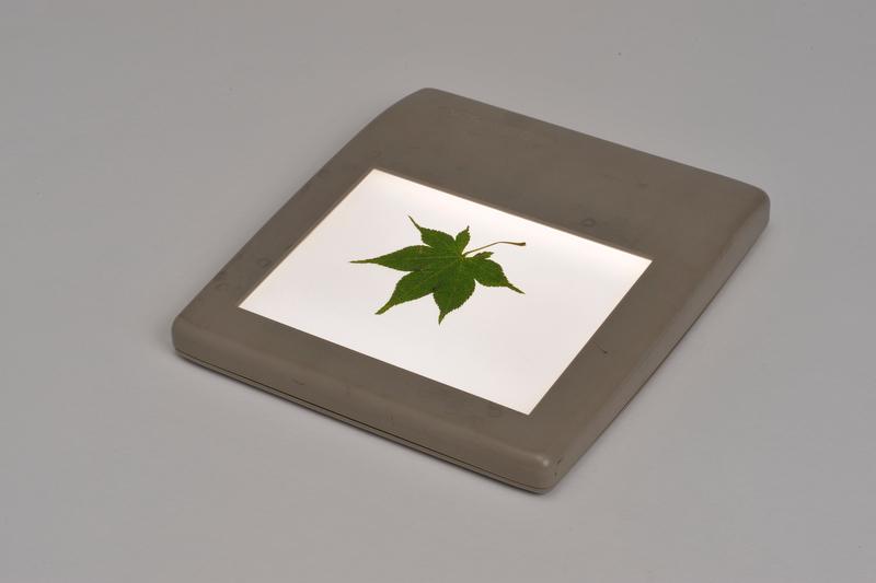 <b>ライトボックスなどがあれば透過光での撮影も可能だ</b>