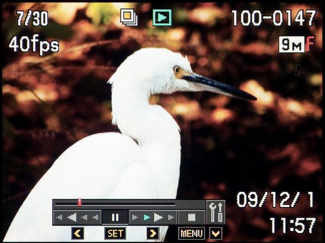 <b>連写で撮った写真はSETボタンを押すと、動画っぽく連続して再生できる。</b>
