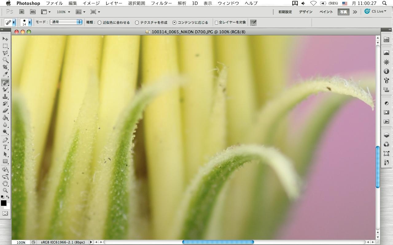 <b>道路端の植え込みの花などは、パッと見はきれいでも、撮った画像をピクセル等倍で見ると、けっこうゴミが付着していたりする</b>