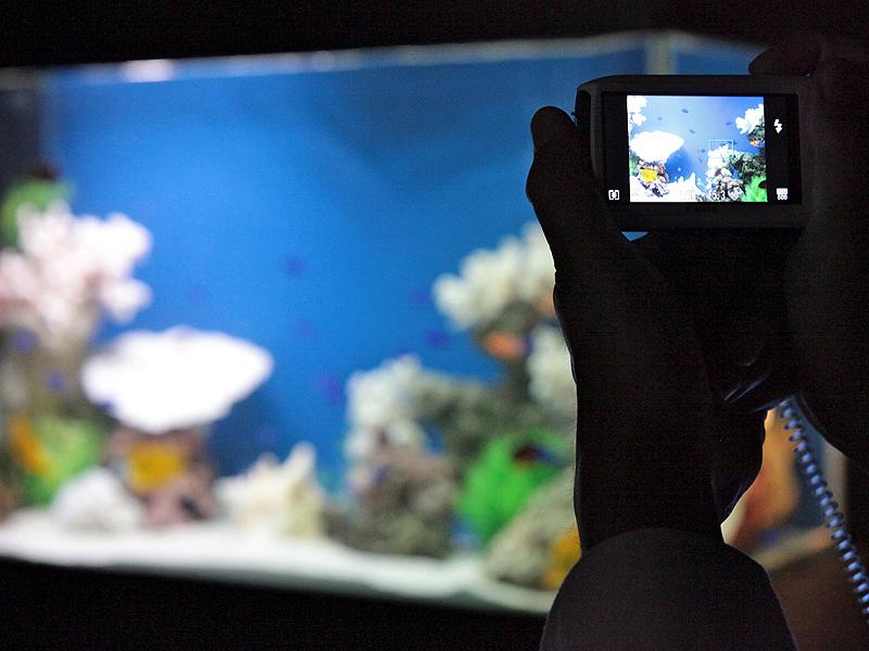<b>EOSのほか、PowerShot S95やIXY 30SのHSシステムを使った高感度撮影を体験できるブースもあった。写真はIXY 30S</b>