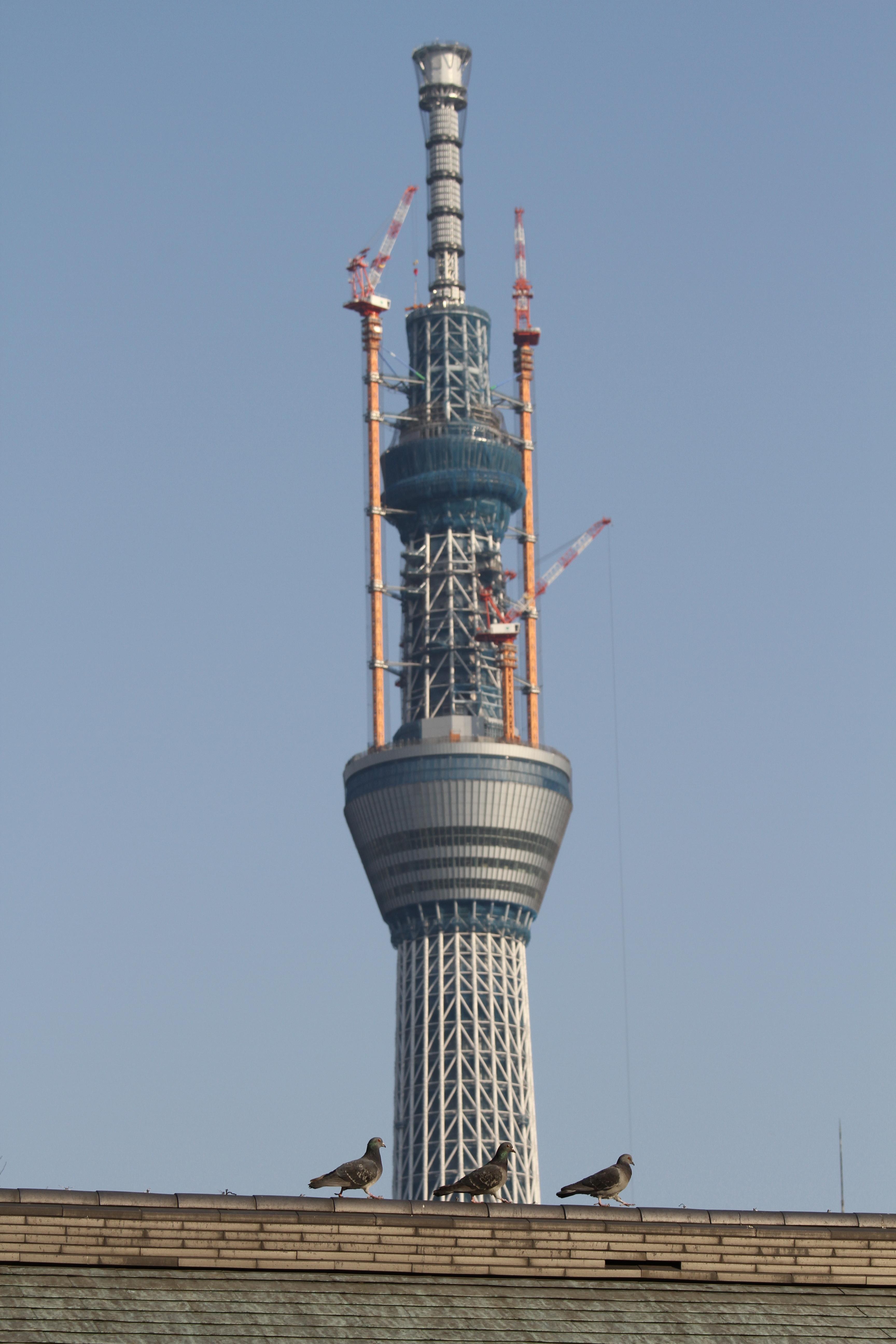 <b>浅草寺の境内からも東京スカイツリーはよく確認できる。ちょうど建物の上にいた鳥と一緒に撮影しようと狙っていると、運よく等間隔に鳥が並んで歩いてくれたので、それをメインに東京スカイツリーを撮影。EOS 7D / EF 70-200mm F4 L IS USM / 3,456×5,184 / 1/500秒 / F8 / 0EV / ISO200 / プログラム / WB:オート / 93mm / 15:26</b>