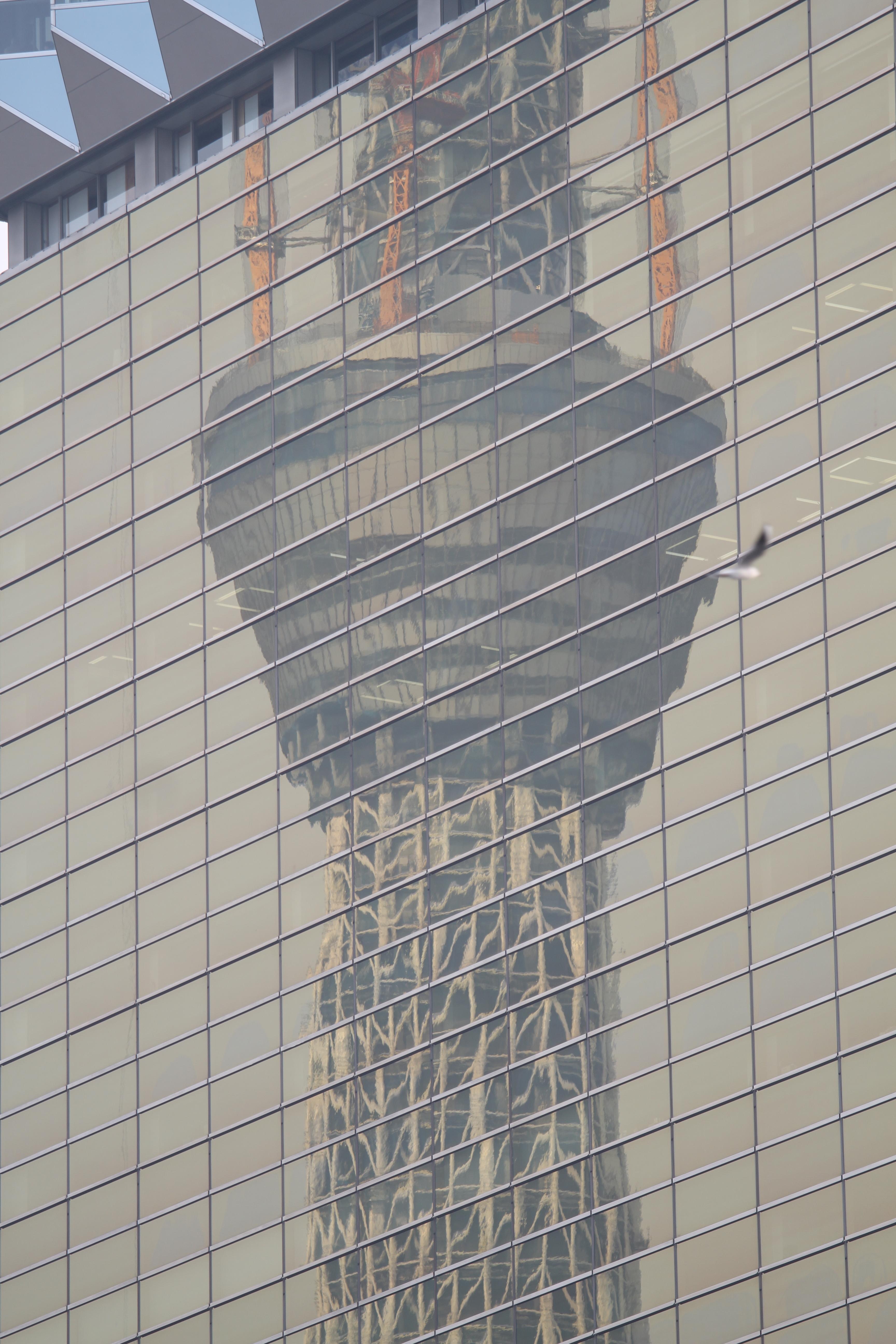 <b>隅田川沿いのビルに東京スカイツリーが写り込むポイントとして有名。ただ、多くの人は吾妻橋やその周辺から眺めるようで、川沿いの遊歩道はそれほど混雑していないので、比較的撮影しやすい。EOS 7D / EF 70-200mm F4 L IS USM / 3,456×5,184 / 1/250秒 / F4 / +0.3EV / ISO100 / プログラム / WB:オート / 176mm / 15:28</b>