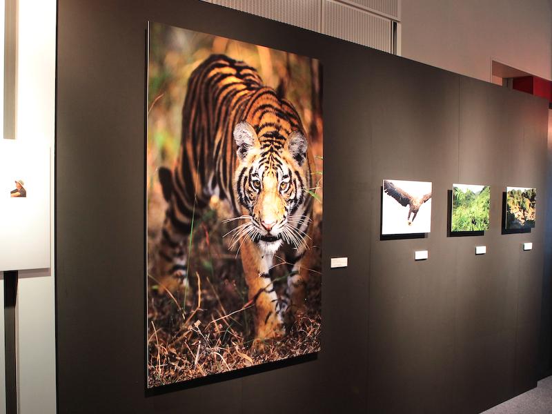 <b>会場には写真家によるEOS 5D Mark IIIの作品を展示</b>