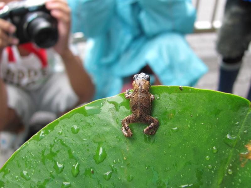 <b>東京都足立区立鹿浜西小学校4年生の作品「とべとべカエル」</b>