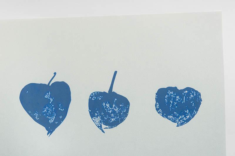 <b>コピアート紙の上にホオズキを載せ、屋外で陽の光に晒した。用紙は薄い黄色なのだが、アイロンで熱を加えると青い像が浮かび上がってくるのです。</b>