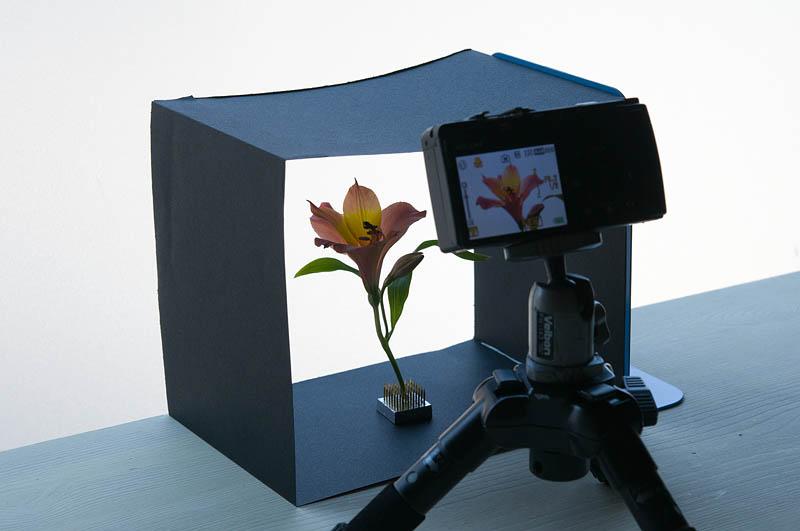 <b>窓際で撮影しているところ。黒い紙や黒い布を使って、透過光以外の光を遮るのがポイント。別にルールがあるわけではないので、撮ってみたい方はいろいろ工夫をしてみてください。</b>
