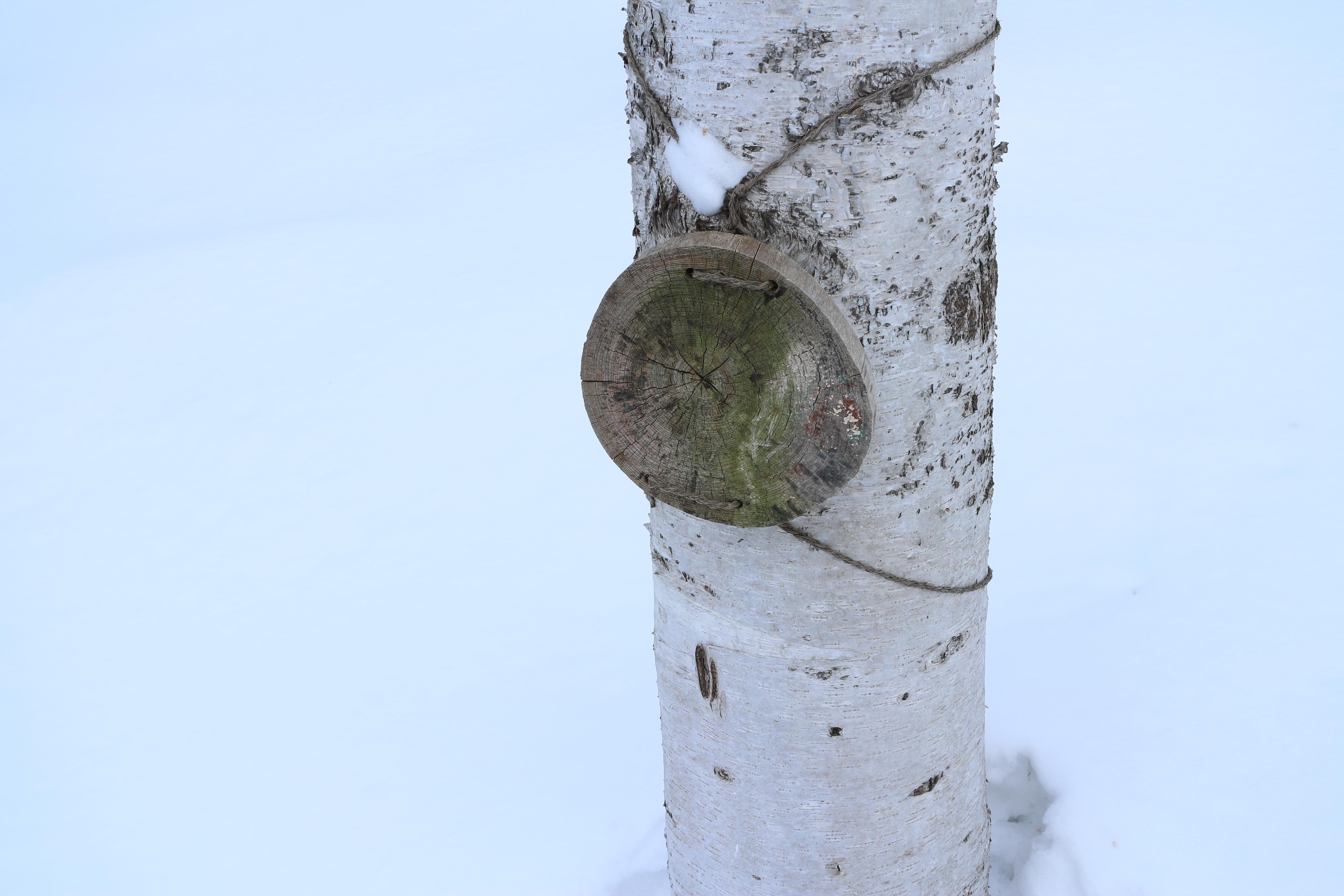 樹の幹に取り付けられているのは、たぶん何かを説明するための札だと思うのだが、書き直そうというつもりはないのだろうか。EOS M / EF-M 18-55mm F3.5-5.6 IS STM / 5,184×3,456 / 1/60秒 / F8 / 1EV / ISO100 / WB:オート / 24mm(38mm相当)