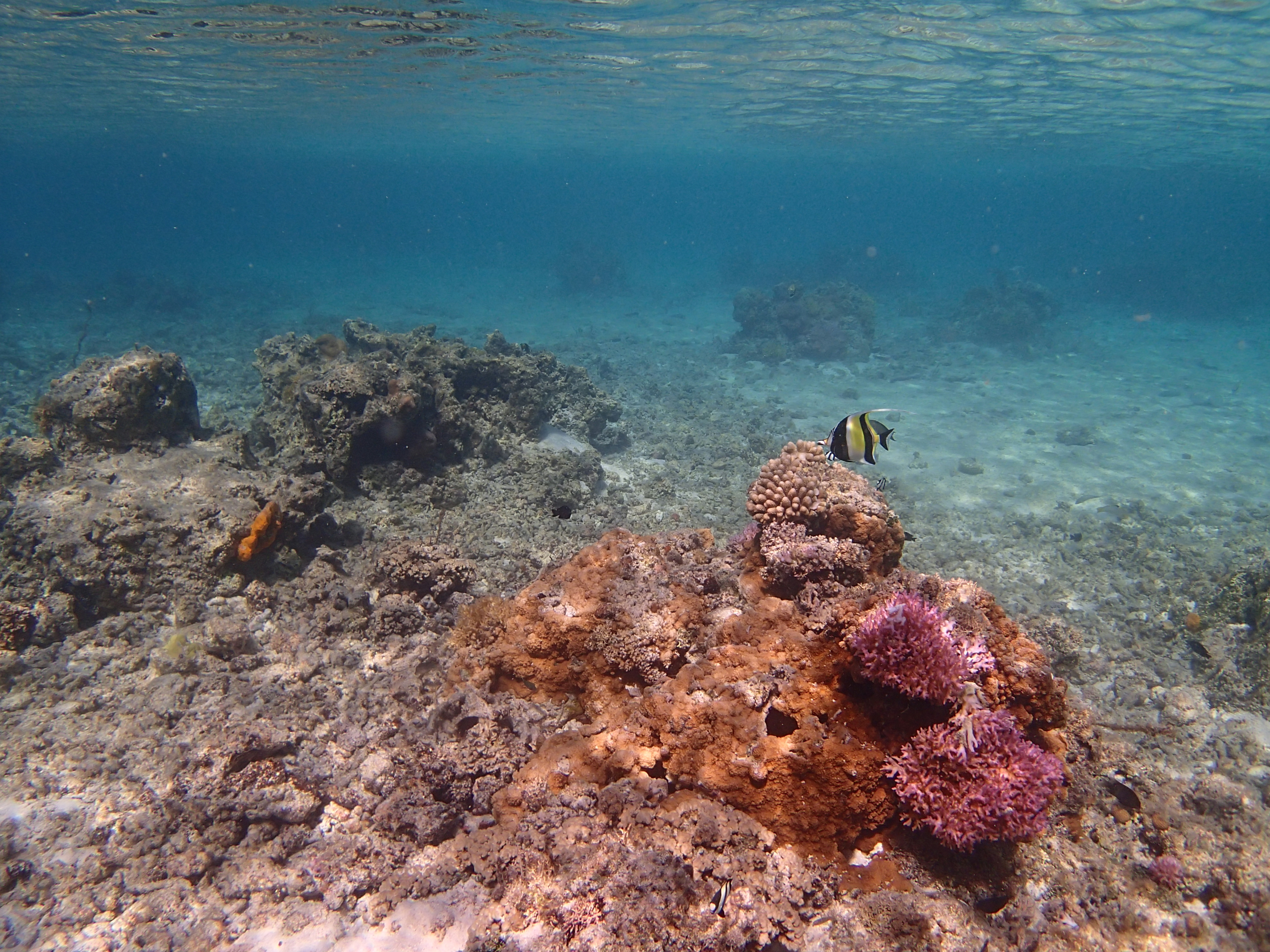 フィッシュアイコンバーターをつけると、より広い画角(24.6mm相当)になる。この例では、水面と海底の両方を収めることができた