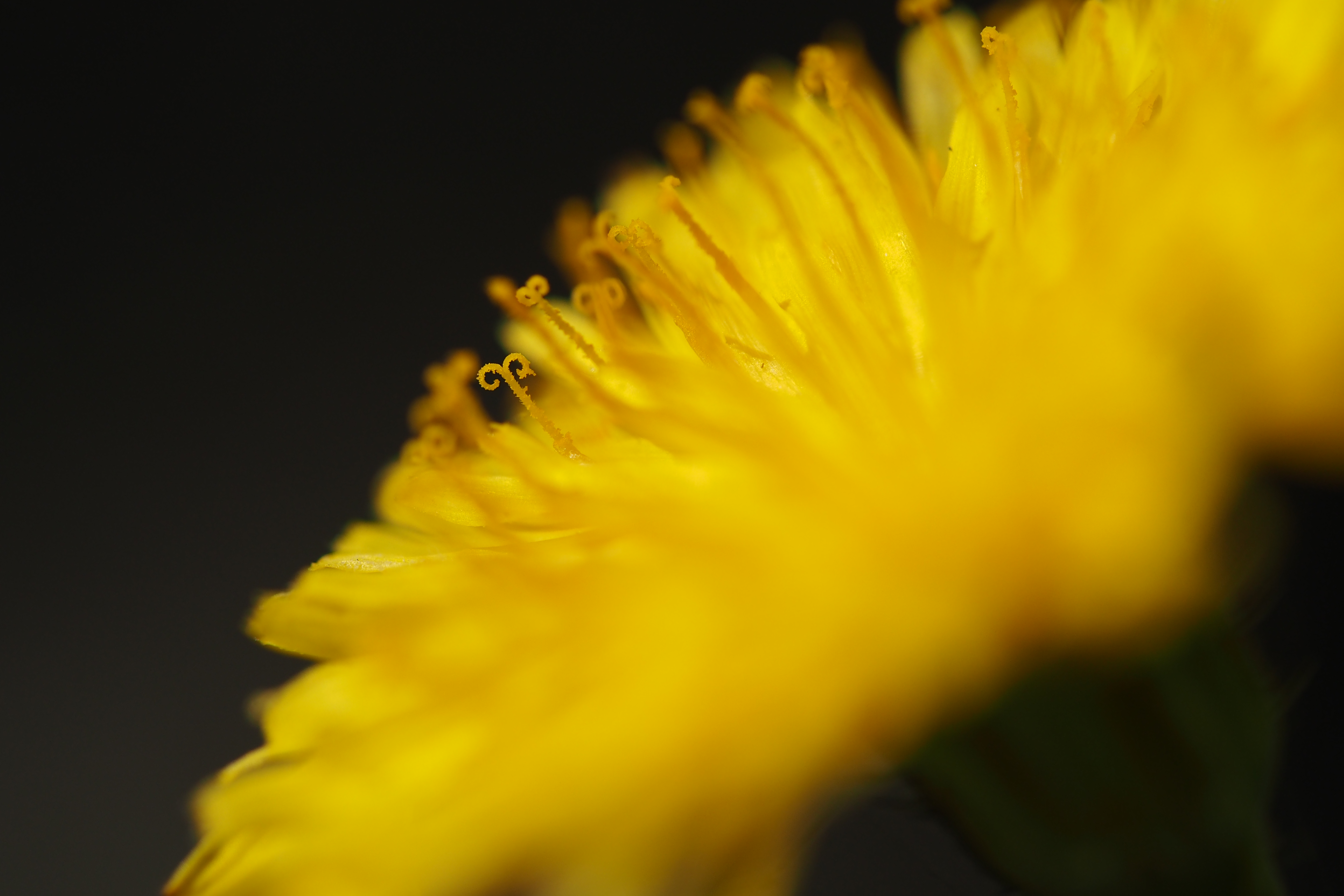 近接域のキレは遠景よりも数段上に感じる。花粉の粒が数えられそうなシャープさ。絞り開放でこれかよって思ってしまう。M.ZUIKO DIGITAL ED 60mm F2.8 Macro / 1/3,200秒 / F2.8 / +0.3EV / ISO200 / 絞り優先AE / WB:晴天 / 60mm