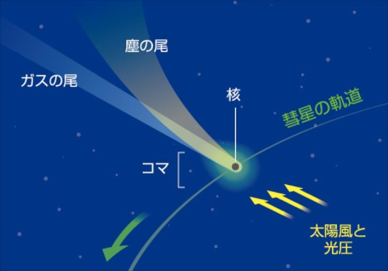 """<b class="""""""">彗星の2種類の尾</b><br class="""""""">彗星核から蒸発したガスの尾は青っぽい色で、太陽風(太陽から吹き出してくるプラズマ)に吹き流されて太陽と反対方向に伸びます。いっぽう、核から飛び出した塵は太陽の光(光子)の圧力で押し流されて尾を作ります。<br class="""""""">彗星から揮発したガスは軽いのでほぼまっすぐ伸びますが、重い塵は彗星核からゆっくり離れていくため、いくらか後方にカーブを描くことになります。"""