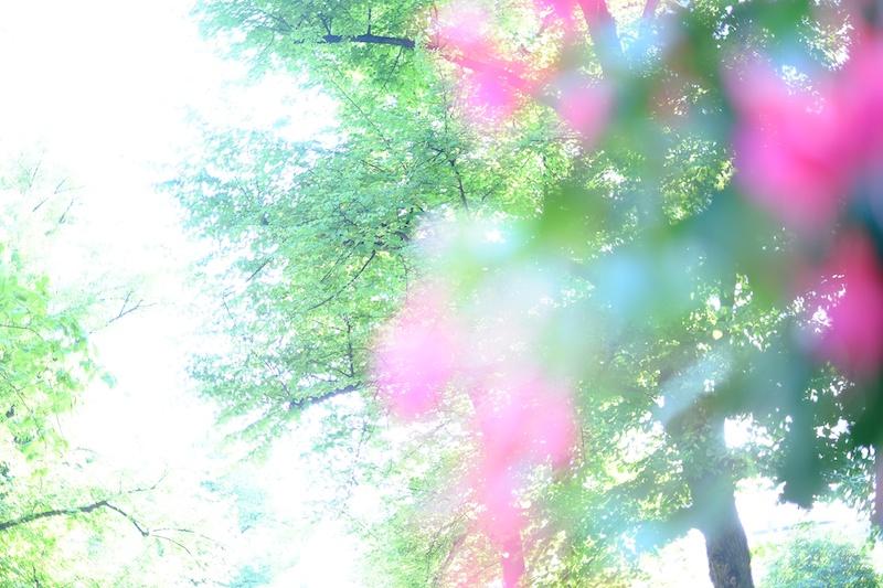 公園に咲いていたピンクのお花を前ボケで入れて街の公園の緑をふわりと撮りました。35mm F1.4で表現するボケが美しくてお気に入りです。