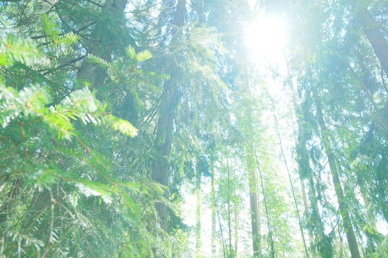 ヌクーシオ国立公園の森の中。とても静かでした。静寂という言葉が合います。聞こえてくるのは、さらさらと揺れる葉の音と、時々聞こえる撮りの声だけ。
